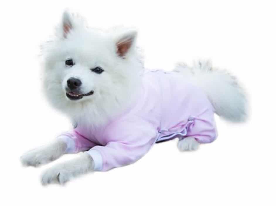 pink puppy onesie