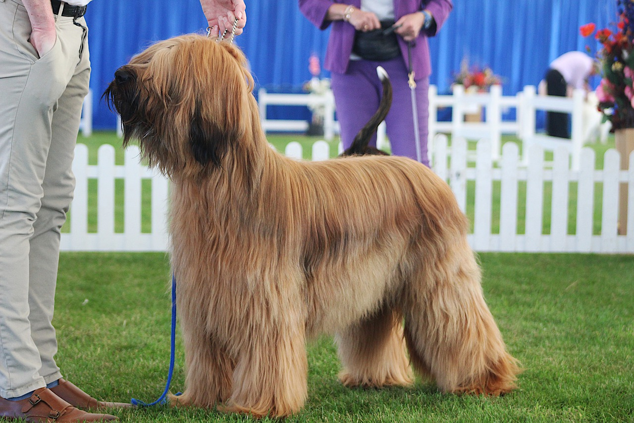 Dog Lovin/' Womens Diva Coat