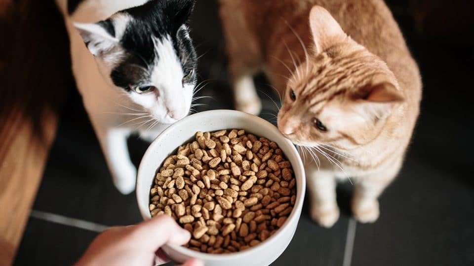 two cats sniffing a bowl of food