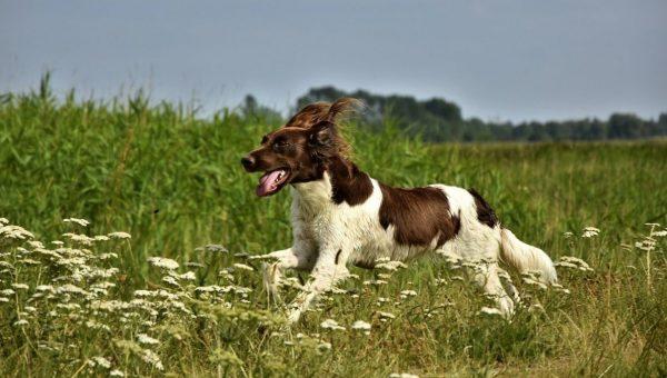 running dog in springtime