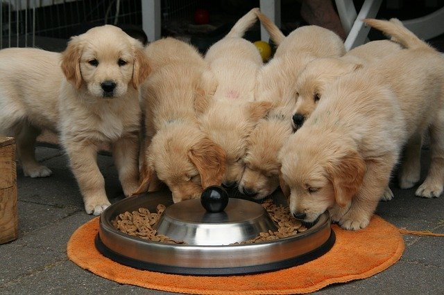Puppies Eating - Pixabay
