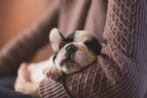 puppy dewormer napping puppy insert image