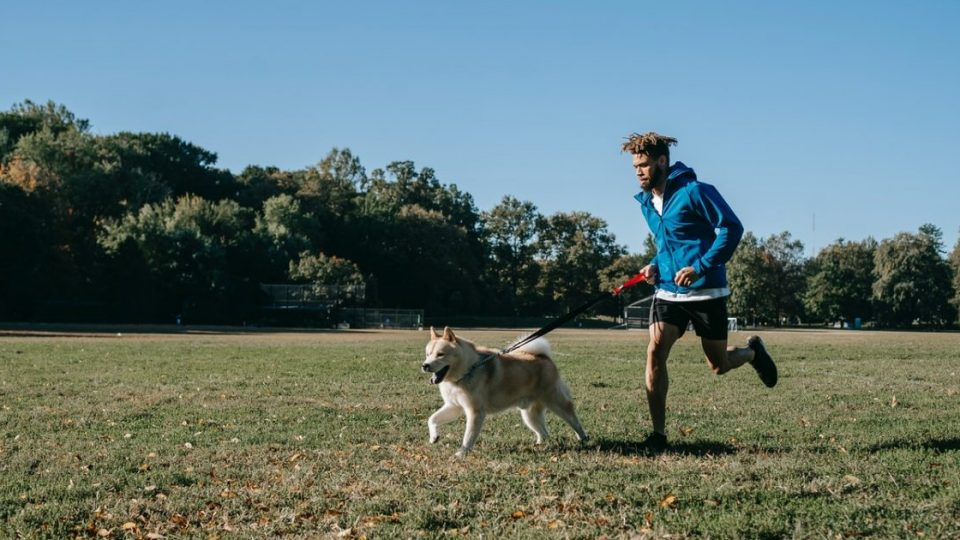 Best Dog Running Gear cover image