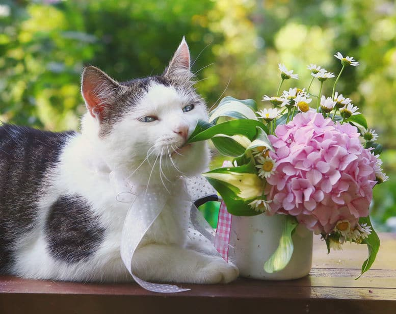 Cat Chewing Plant - 123RF