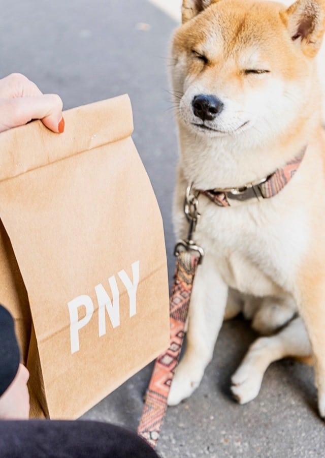 burgers et restaurant dog friendly paris