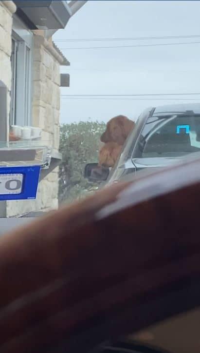 puppuccino drive-thru window
