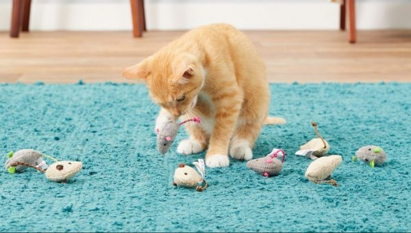 cat playing with toy mice with catnip for cats