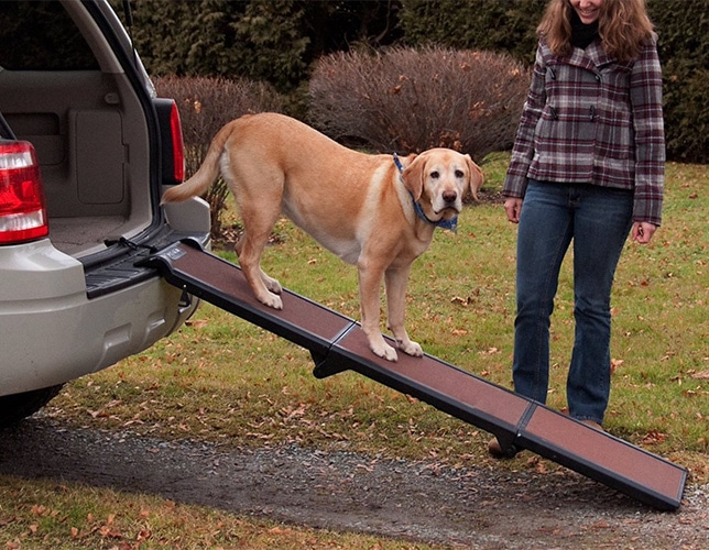 dog on tri-fold ramp