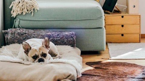 activité à faire à la maison avec son chien