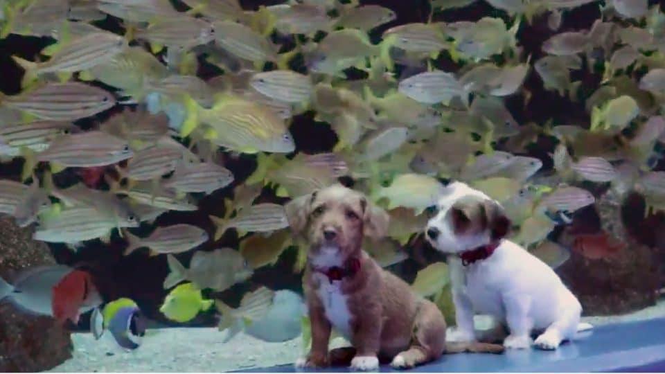 puppies explore georgia aquarium
