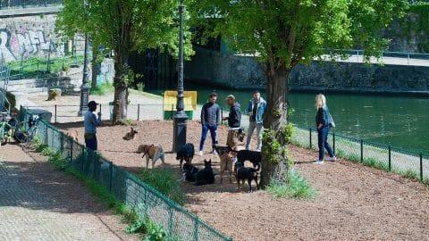 caniparc : parc autorisé aux chiens à Paris