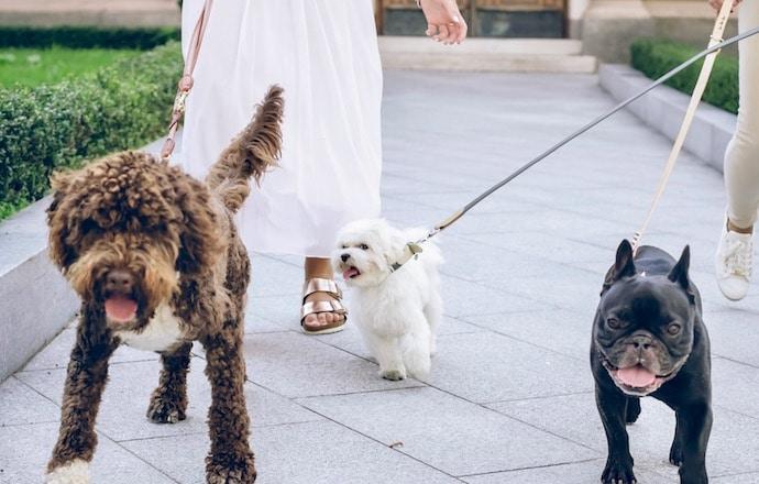 chiens en promenade à paris