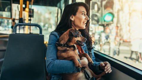 chien dans les transports en commun