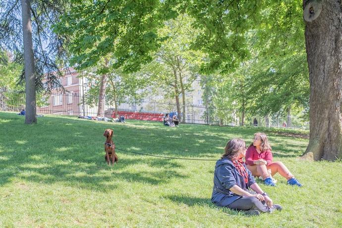 Chien au Parc des Buttes Chaumont à Paris