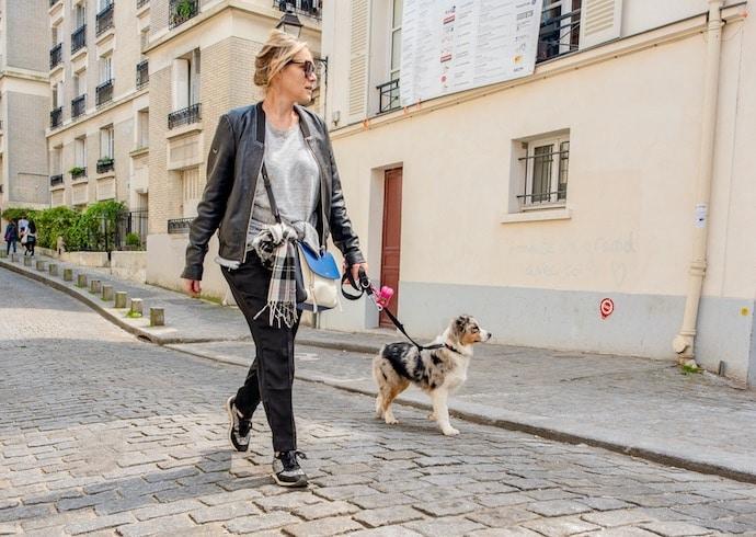 chien en ville avec son maître