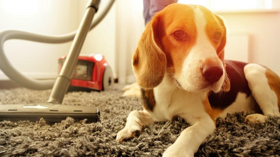 chien et produit ménager non toxique