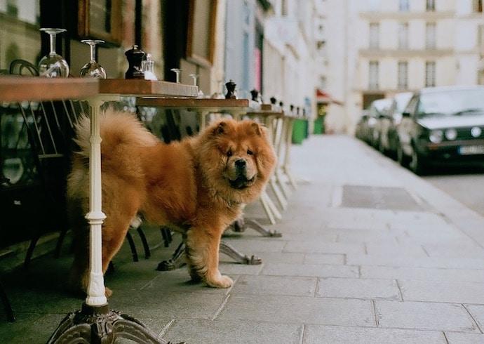 Terrasse d'un restaurant qui accepte les chiens à paris