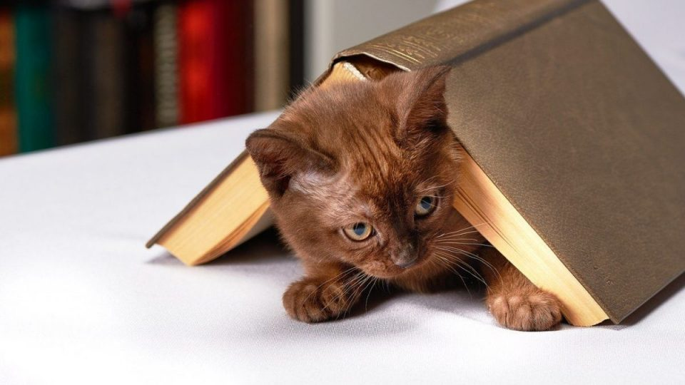 cat under open book