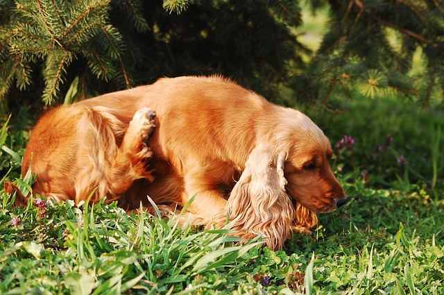 Dog With Allergies - Pixabay