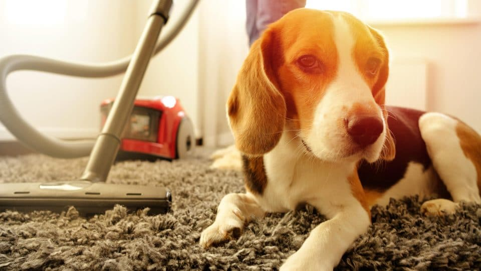 Pet Safe Cleaning How To Clean Safely