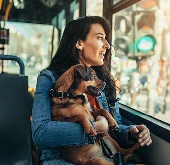 femme et son chien dans le bus de la ville