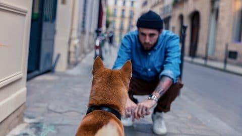 adapter son chien à vivre en ville