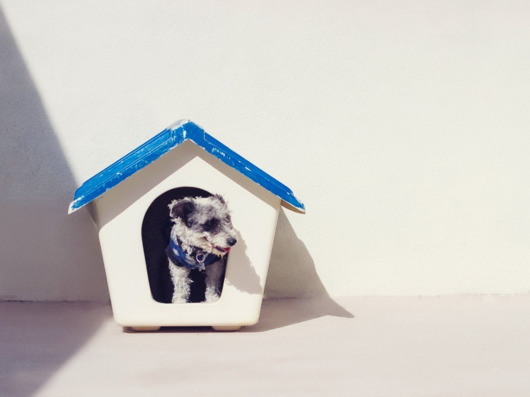 A small dog sitting inside a painted dog house.