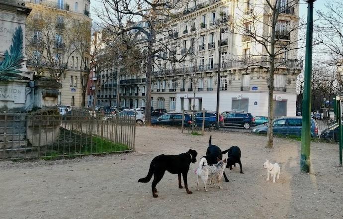 Parc à chien à Paris