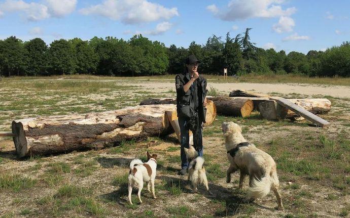 Parc à chien au bois de Vincennes