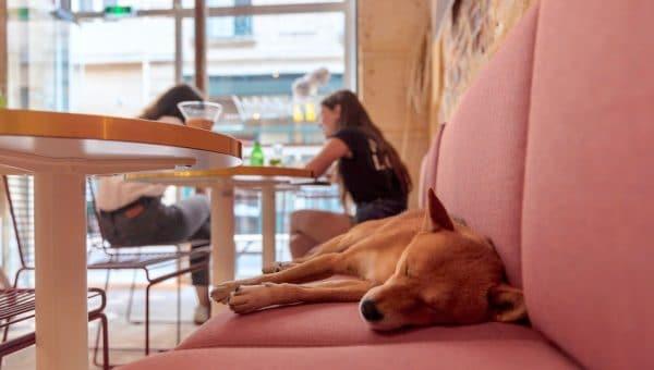 restaurant qui accepte les chiens à Paris