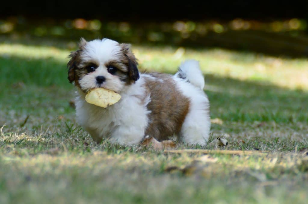 puppytreat