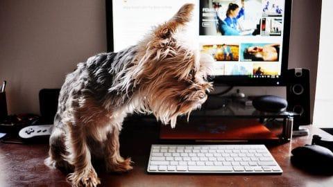 télétravail : travailler de la maison avec son chien