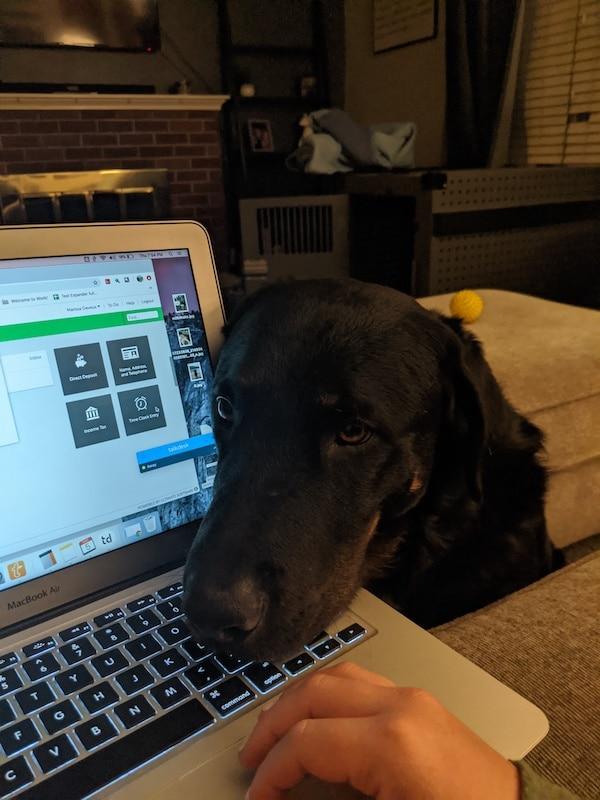 télétravail avec son chien