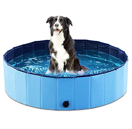 dog in round blue pool