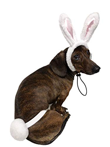 white bunny ears and cotton tail dog Easter outfit
