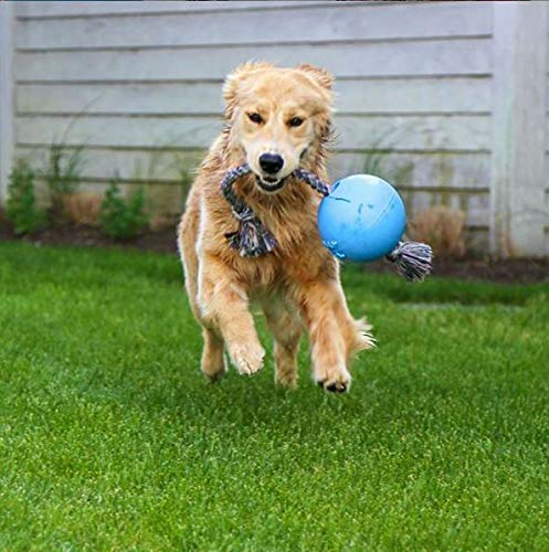 golden with rope and ball toy