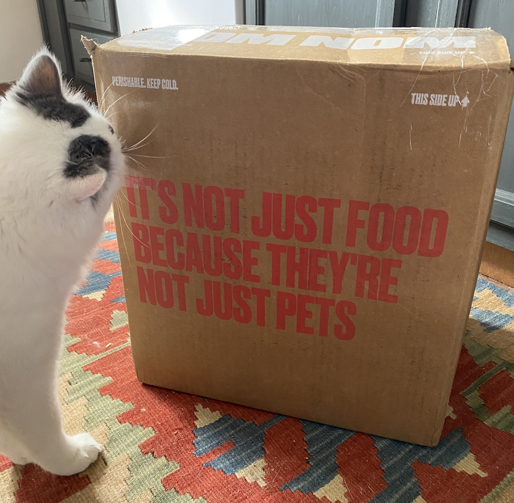 cat observing box of fresh cat food delivery