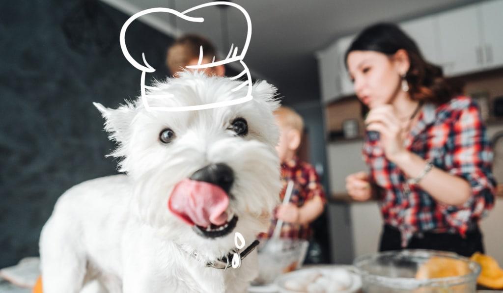 eco-friendly diy dog food