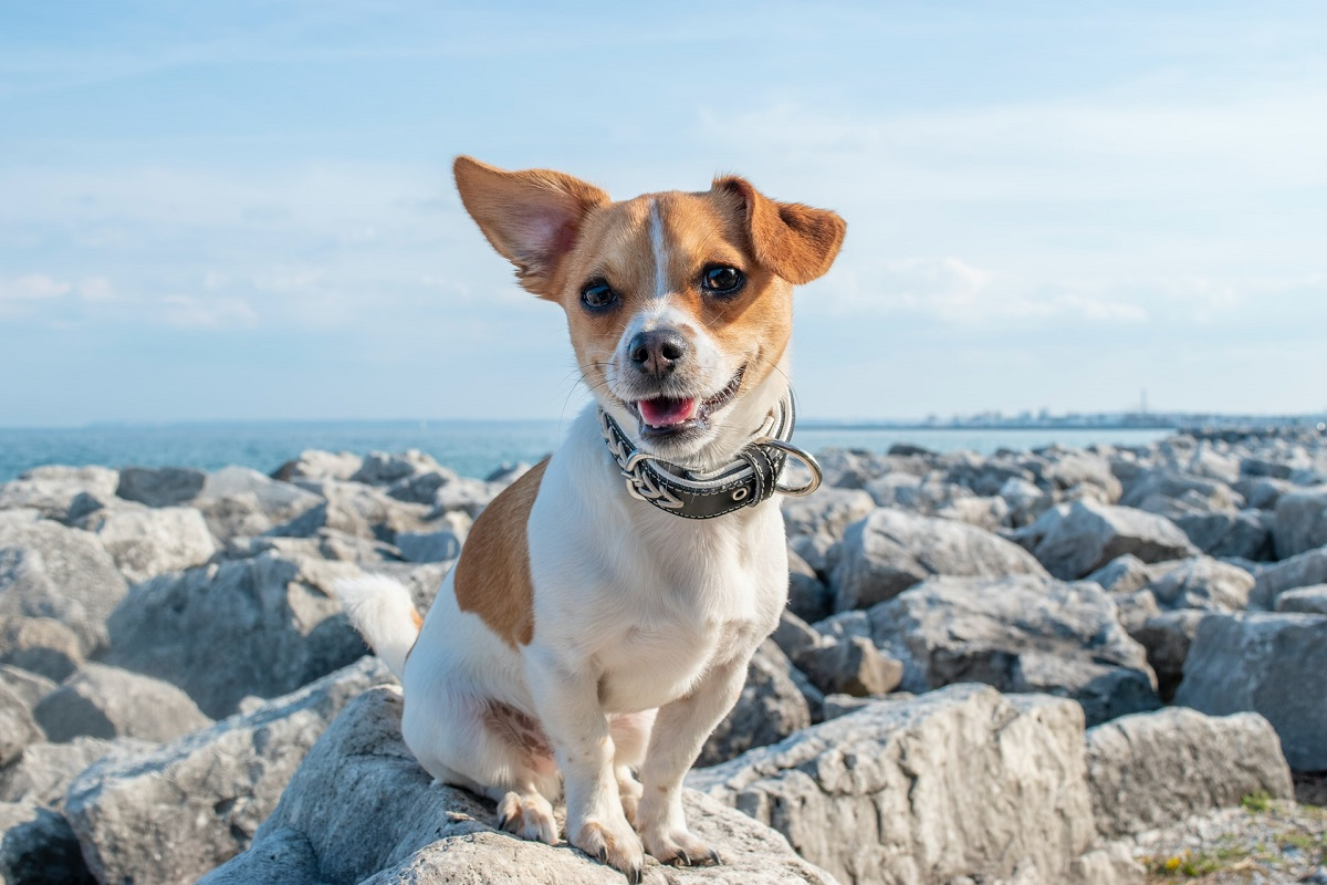 A small dog sitting on a rocky shore.