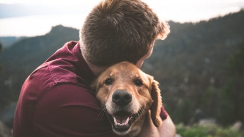 A man hugging a Golden Retriever. The dog looks directly into the camera, smiling.