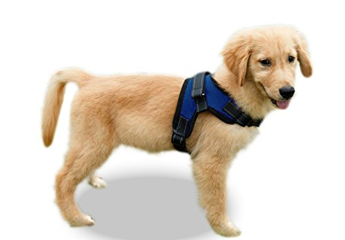 puppy wearing blue Copatchy harness