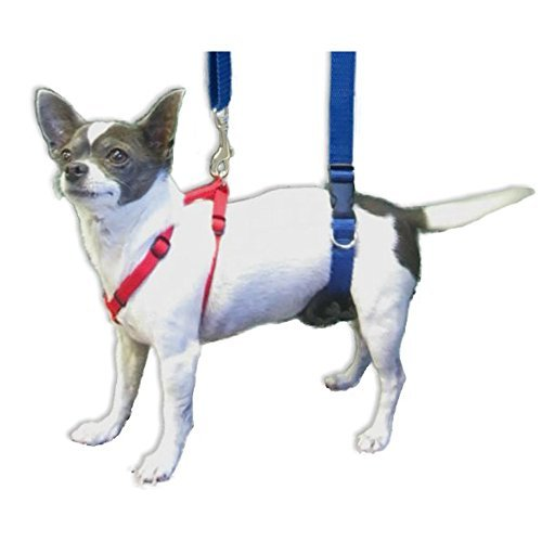 dog wearing sling harness