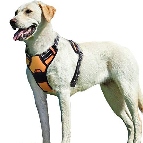 dog standing in orange Eagloo harness