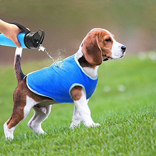 beagle wearing Selmai blue swamp cooler dog cooling vest