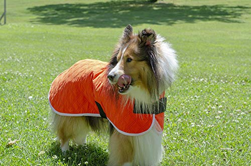 collie in red Derby Originals quilted dog cooling vest