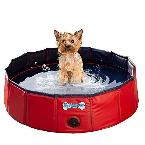 dog in red V-Hanver foldable pool