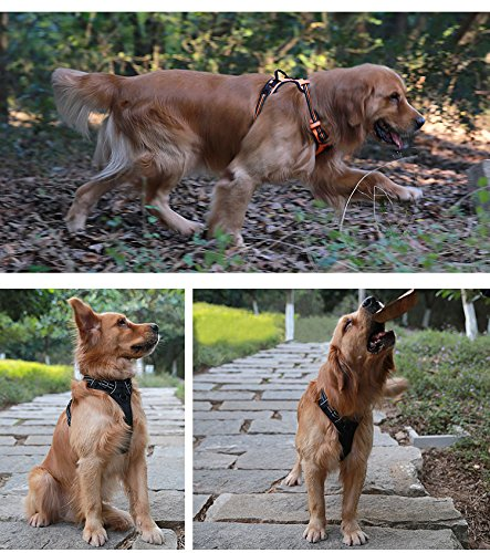 three examples of dogs wearing Juxzh harness