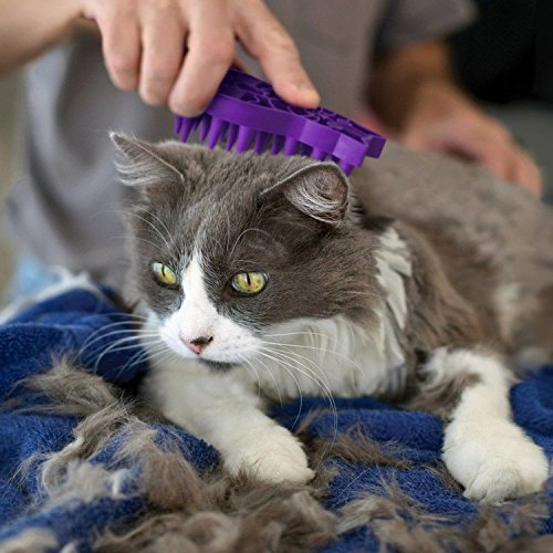 cat being groomed with Kong ZoomGroom rubber cat brush