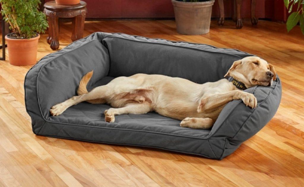 dog resting on bolster dog bed