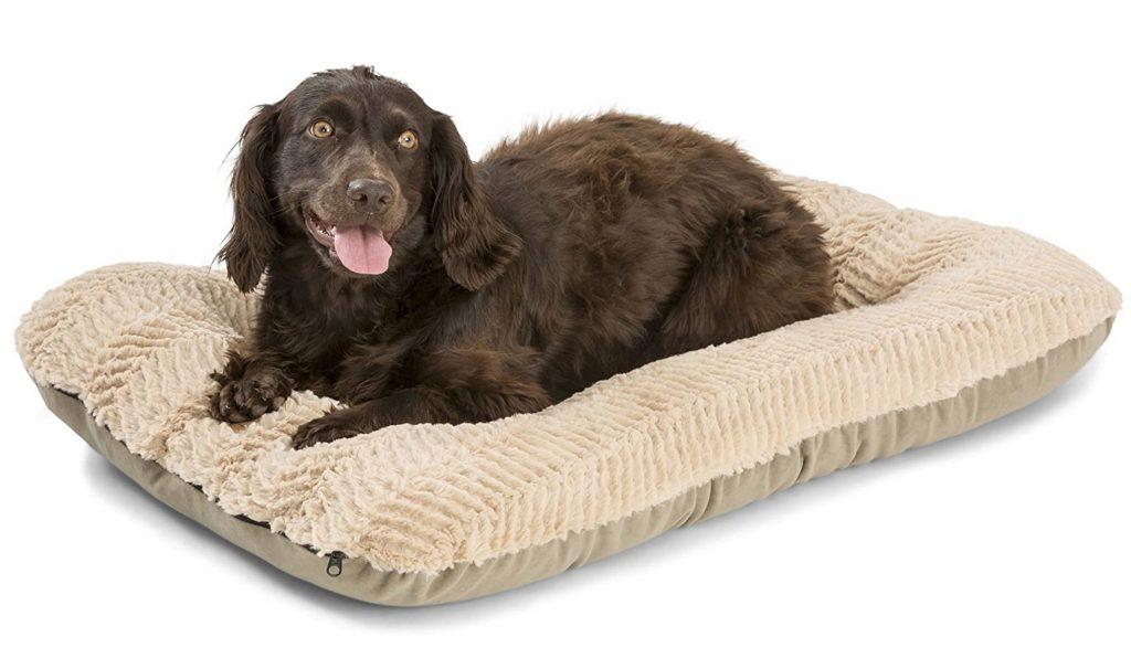 dog on beige west paw bed
